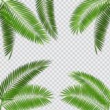 Palmbladvektorillustration på genomskinlig bakgrund royaltyfri illustrationer
