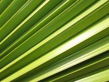Palmblathintergrund Lizenzfreie Stockbilder