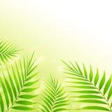 Palmblathintergrund Lizenzfreie Stockfotografie