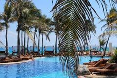 Palmblatt über Pool Lizenzfreie Stockfotos