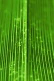 Palmblatt Lizenzfreies Stockbild