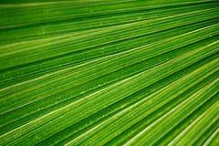 Palmblatt Imagenes de archivo