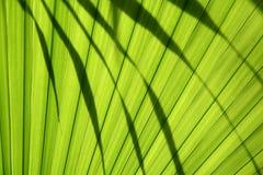 Palmblatt Royalty Free Stock Photos