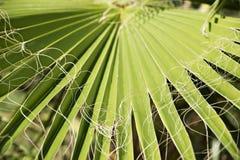 Palmblatt lizenzfreie stockfotos