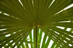 Palmblatt Stockfoto