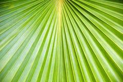 Palmblatt stockbilder