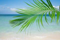 Palmblatt, blaues Meer und tropischer weißer Sand setzen unter der Sonne auf den Strand Lizenzfreie Stockfotos