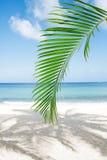 Palmblatt, blaues Meer und tropischer weißer Sand setzen unter der Sonne auf den Strand Stockfoto