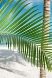 Palmblatt, blaues Meer und tropischer weißer Sand setzen unter der Sonne auf den Strand Stockbilder