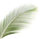 Palmblatt getrennt Stockfotografie