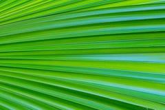 Palmblatt-Hintergrund Lizenzfreies Stockfoto