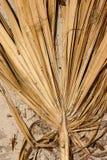 Palmblatt im Sand Stockfotografie
