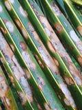 Palmblatt kopiert Schrägstreifen Stockbild