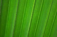 Palmblatt mit den diagonalen Zeilen (horizontal) Stockfotos