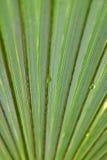 Palmblatt mit Wasser-Tröpfchen Stockfoto