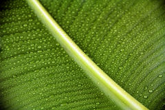 Palmblatt mit Wassertropfen Stockfotos