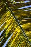 Palmblatt in Paraty Stockfoto