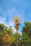 Palmblattbaum lizenzfreies stockfoto