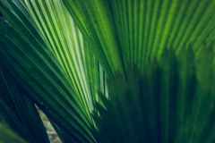 Palmblattbeschaffenheit Stockbilder