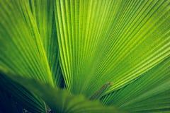 Palmblattbeschaffenheit Stockfotografie