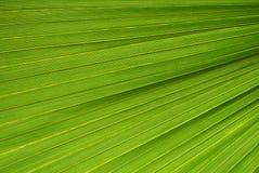 Palmblattbeschaffenheit Lizenzfreie Stockbilder