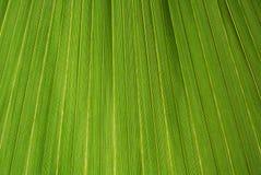 Palmblattbeschaffenheit Stockfoto