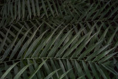 Palmblattbeschaffenheit Stockbild