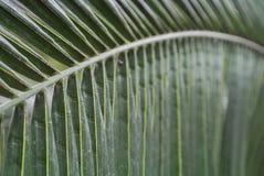 Palmblattbeschaffenheit Stockfotos