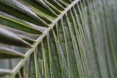 Palmblattbeschaffenheit Lizenzfreie Stockfotografie