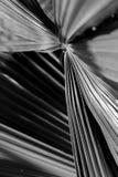 Palmblattbeschaffenheit lizenzfreies stockbild