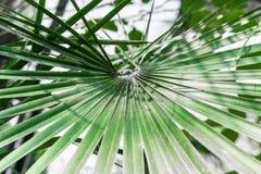 Palmblattdesign im tropischen Wald lizenzfreie stockfotografie