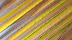 Palmblatthintergrund Stockfoto