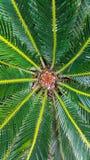 Palmblattkern im Garten lizenzfreie stockbilder
