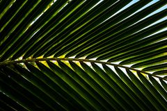 Palmblattnahaufnahme-Betriebshintergrund Stockfotografie