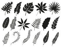 Palmblattschattenbild Monstera-Wedel, Pflanzenblätterschattenbilder und tropische Palmenwedel lokalisierten Vektorikonensatz stock abbildung
