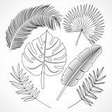 Palmblattschattenbild-Satzentwurf lizenzfreie abbildung