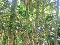Palmbloem royalty-vrije stock afbeelding