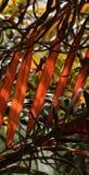 Palmblätter Stockbilder