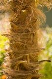 palmboombast Στοκ Εικόνα