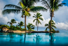 Palmbos, Barbados Stock Foto