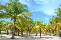 Palmbos op het strand Royalty-vrije Stock Afbeeldingen