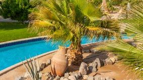 palmbosje in Egypte op de kust van het Rode Overzees stock foto's