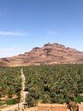 Palmbosje en berg in Marokko royalty-vrije stock foto's