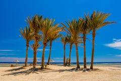 Palmbosje op het Strand door het Rode Overzees in Egypte royalty-vrije stock foto