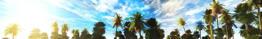 Palmbosje, panorama Stock Afbeeldingen