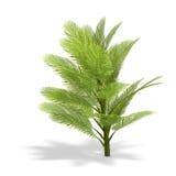 Palmbush Stock Images