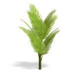 Palmbush Royalty Free Stock Photography