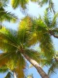 Palmeüberdachung lizenzfreie stockfotografie