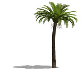 palme结构树 免版税库存照片