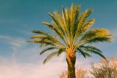 Palme über Himmelhintergrund Lizenzfreies Stockfoto